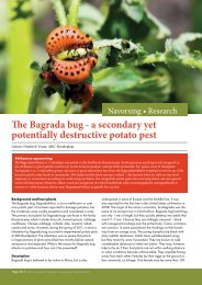 The Bagrada bug - Potatoes South Africa
