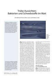 Bakterien und Schwebstoffe im Watt - Universität Oldenburg