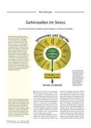 Gehirnzellen im Stress - Universität Oldenburg
