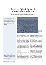 Bakterien-Nährstoffmodell: Muster im Wattsediment - Universität ...