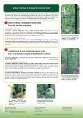Dossier POUSS'VERT - Primavera - Page 4