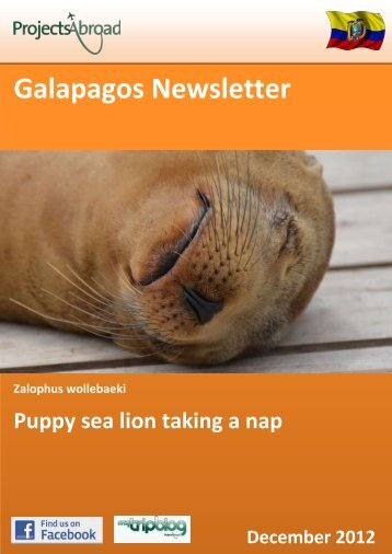 Galapagos Newsletter - Projects Abroad
