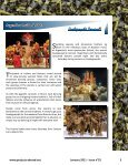The Argen Times - Projects Abroad - Page 3