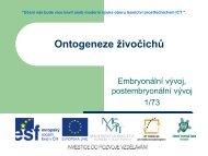 Ontogeneze živočichů, embryonální vývoj ... - Projekt EU