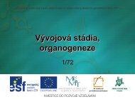 Vývojová stádia, organogeneze - Projekt EU