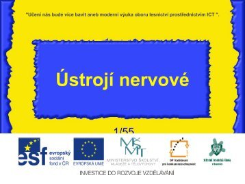 Ústrojí nervové - Projekt EU
