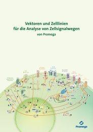 Vektoren und Zelllinien für die Analyse von ... - Promega