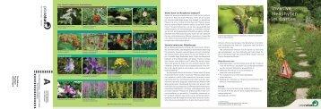 Invasive Neophyten im Garten» (pdf) - Pro Natura