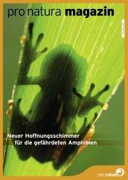 Neuer Hoffnungsschimmer für die gefährdeten Amphibien - Pro Natura