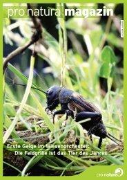 Die Feldgrille ist das Tier des Jahres» (pdf) - Pro Natura