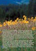 Die Armentarawiesen - Seite 4