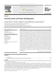 Prenatal stress and brain development - University of Florida ...