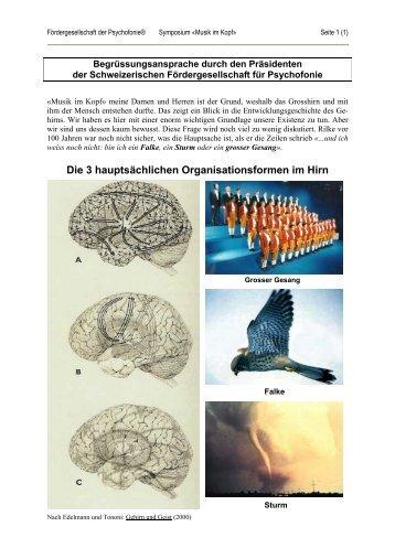 Hirnrinde Magazine