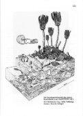 5 - Arbeitskreis Paläontologie Hannover - Seite 5