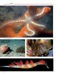 The New Marine Biology Station The New Marine ... - Quark Magazine - Page 3