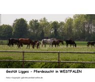 Gestüt Ligges - Pferdezucht in WESTFALEN