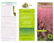 Pink or White Powderpuff Grass.qxd - QVC.com