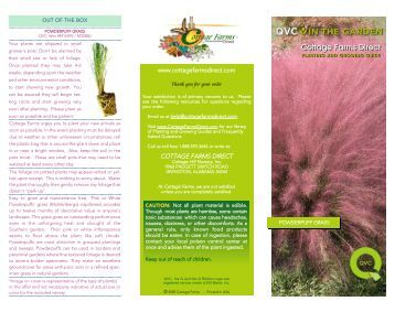 Pink or White Powderpuff Grass.qxd - QVC.com