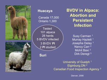 BVDV in Alpaca: Abortion and Persistent Infection