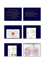 Exogen allergische Alveolitis Akute exogen all. Alveolitis ...