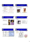 Zelluläre Grundlagen und Netzwerke des Immunsystems: - Page 2