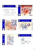 Zelluläre Grundlagen und Netzwerke des Immunsystems: - Page 3