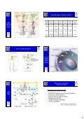 Zelluläre Grundlagen und Netzwerke des Immunsystems: - Page 5