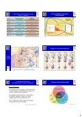 Zelluläre Grundlagen und Netzwerke des Immunsystems: - Page 6