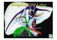 Bildgebung der Leber - Institut für Radiologie, Nuklearmedizin und ...