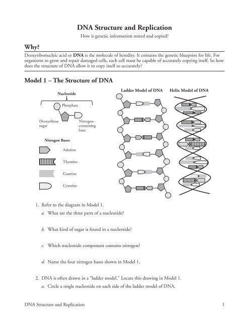 Dna And Replication Worksheet Answers Label The Diagram ...