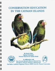 Cayman Parrots - RarePlanet