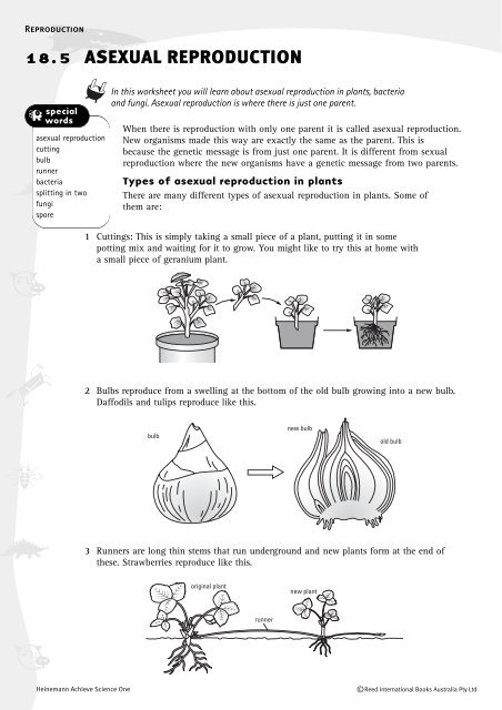 Types of asexual reproduction worksheet key