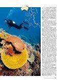 Dive & Drive - Reisemobil Interaktiv - Seite 2