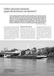 Helfen naturnahe Gewässer gegen die Dominanz ... - Rheinaubund