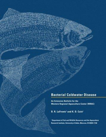 Bacterial Coldwater Disease - University of Washington