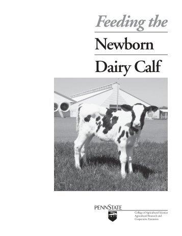 Feeding the Newborn Dairy Calf - eXtension