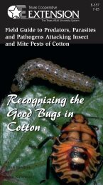 Recognizing the Good Bugs in Cotton - Texas Is Cotton Country ...
