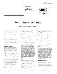 Pond Culture of Tilapia