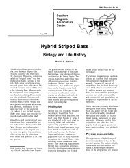Hybrid Striped Bass: Biology and Life History