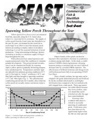 Spawning Yellow Perch Throughout the Year - eXtension