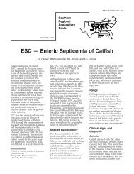 SRAC 0477: ESC - Enteric Septicemia of Catfish