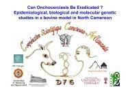 Onchocerca ochengi - Programme Onchocercoses   Home
