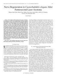 Nerve Regeneration in Caenorhabditis elegans After Femtosecond ...