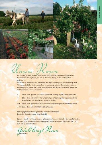Unsere Rosen - Bioland Rosenschule Ruf