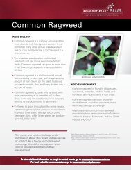 Common Ragweed - Roundup Ready PLUS