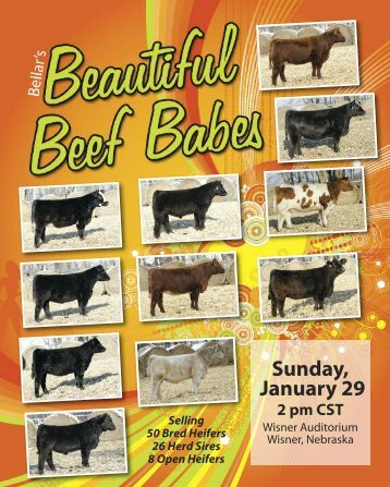 VIEW CATALOG - Bellar Cattle Co.