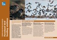 Farmland bird feeding stations advisory sheet - RSPB
