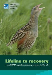 Lifeline to recovery - RSPB