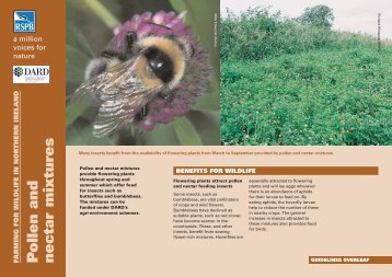 Pollen and nectar mixtures - RSPB
