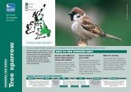 Tree sparrow advisory sheet - RSPB